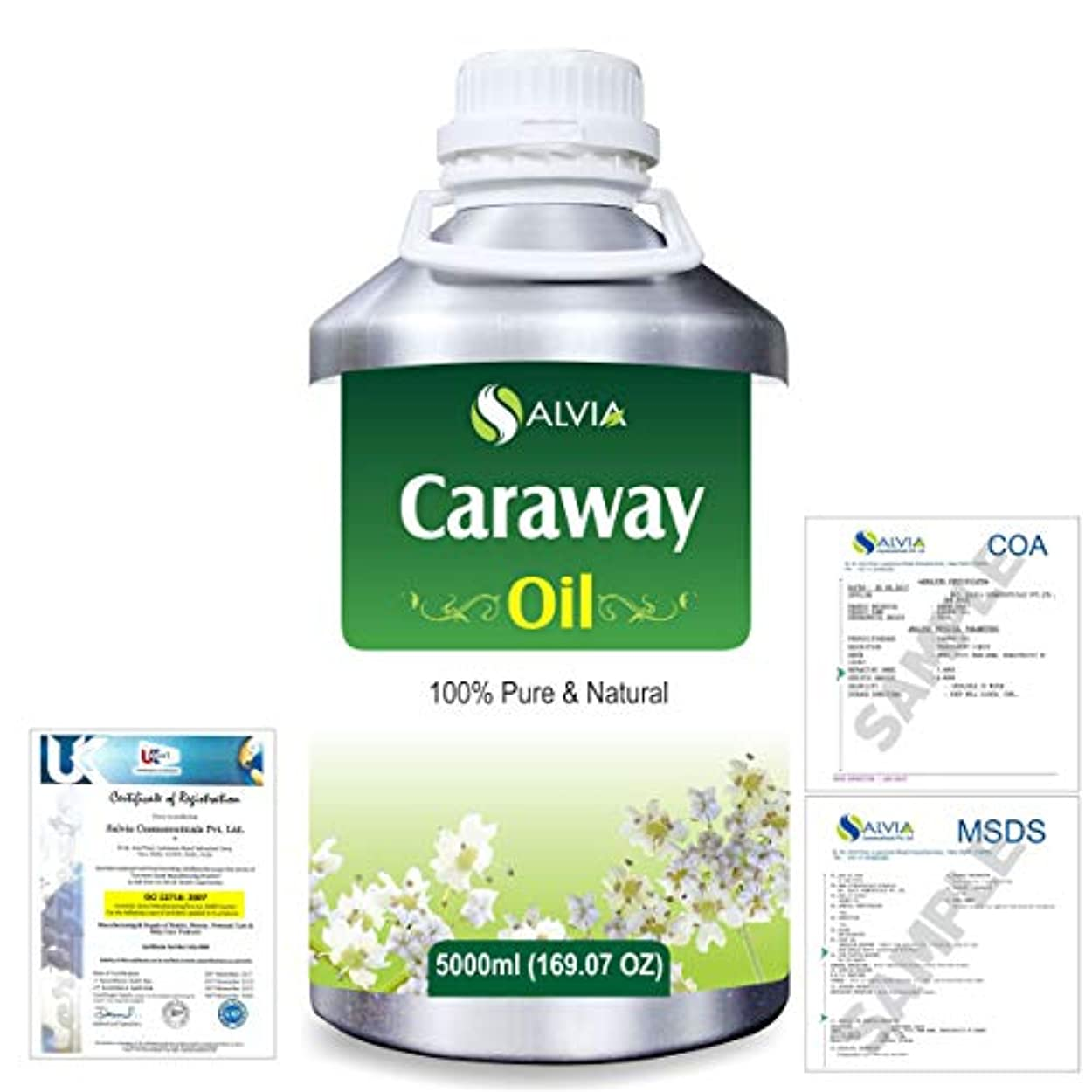 時制殺人かすれたCaraway (Carum carvi) 100% Natural Pure Essential Oil 5000ml/169fl.oz.