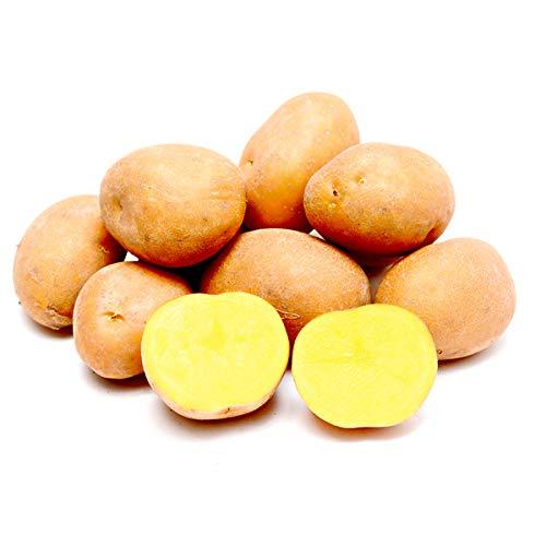 北海道産 ご家庭用 じゃがいも インカのめざめ 10kg (共撰/サイズお任せ) 馬鈴薯 ジャガイモ