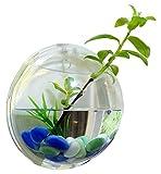 blue voyage 壁掛け アクリルケース 直径23cm 半球 (クリア)