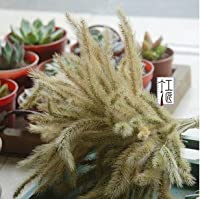 元の天然のウサギの尾乾草の犬の尾の草の干し草手作りのアルファルファ乾草の家の飾りのアイデア100個/パック:青