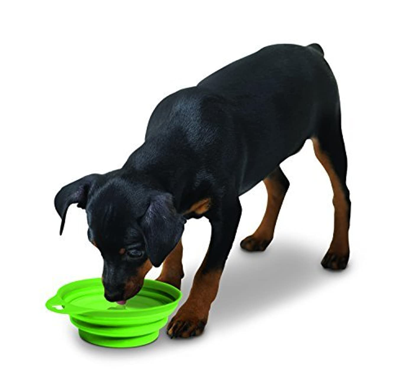 Large Collapsible Lightweight and Portable Pet Food & Water Bowl [並行輸入品]