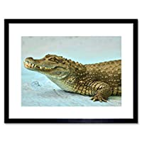 Caiman Crocodile Animal Reptile Art Picture Framed Wall Art Print 動物画像壁