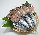 島根県浜田市のブランド魚 「どんちっちあじ一夜干し (7~15尾 約1000g)」