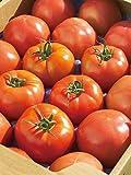 福島県産 大玉 トマト 4kg 酸味と甘みのバランスが絶妙な新鮮トマト