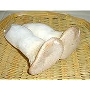【自然農法】 エリンギ 約100g ※5個セット(約500g) ※自然農法で育てました (無農薬・無化学肥料栽培)