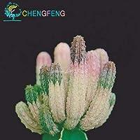 50個/バッグフラワーシードアガベ、希少な多肉多年生開花アガベ種子の家の庭の装飾:24