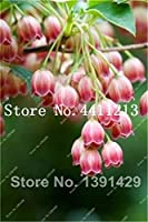 Virtue 50 Pcs Lily of The Valley Flower Bonsai Indoor Rare Bell Orchid Flower Rich Aroma Bonsai Flowers Plant Perennial Flowers Garden: 2