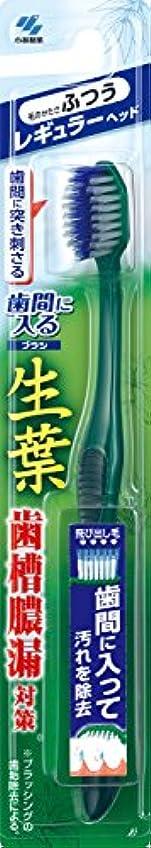 寝る強要アルファベット順生葉(しょうよう)歯間に入るブラシ 歯ブラシ レギュラー ふつう