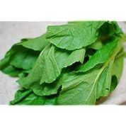 山形青菜(せいさい)2kg