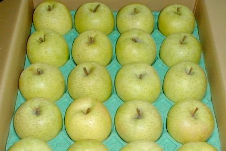 青森産 王林 CA貯蔵りんご 10kg 中玉36〜40個入り