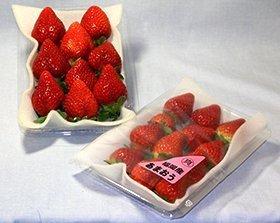 福岡県産いちご あまおう 18~24粒入り