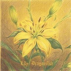 Dragon Ash「Lily」のCDジャケット