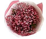かすみ草花束 赤