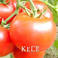 新参者!巨大なトマトの種、果物や野菜の鉢植えのカボチャトマトの種子家庭菜園用100個/袋、#Iaxjff