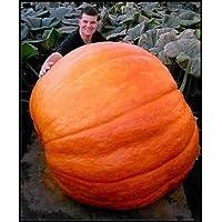 超巨大かぼちゃ 6粒