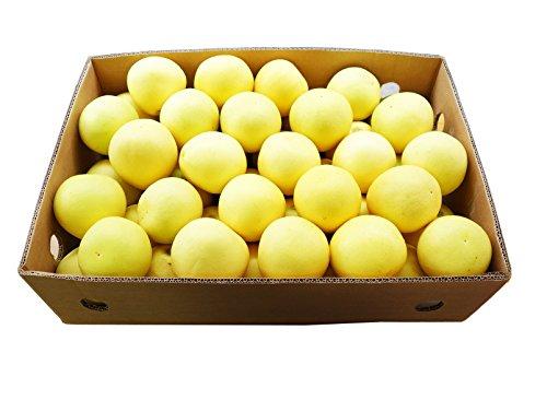 グレープフルーツ ホワイト 輸入品