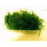 よく育つ栄養素2カ月分付き ウィローモス フードパック一杯(横幅10cm*奥行8cm*深さ2cm ※発送時はパックなしで圧縮発送) 無農薬