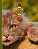 2020 Planner: Cat Closeup | 12 Months Week to two-page Diary 150 pages 8.5 x 11 with Contacts - Password - Birthday lists (2020 weekly planner organizer diary journal)