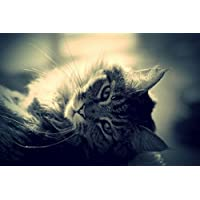 猫の動物 - #30173 - キャンバス印刷アートポスター 写真 部屋インテリア絵画 ポスター 90cmx60cm