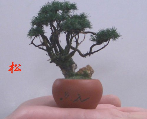 手造りミニ盆栽 松(丸鉢)