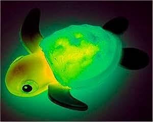 おふろの電気消して!ウミガメの赤ちゃん