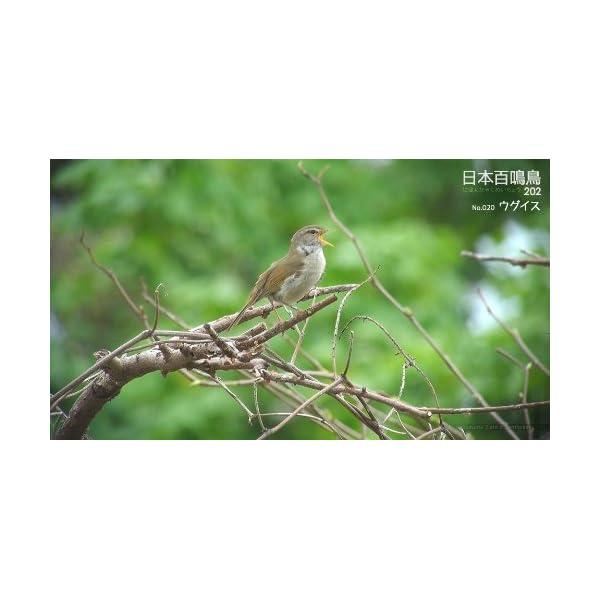 シンフォレストBlu-ray 日本百鳴鳥 20...の紹介画像5