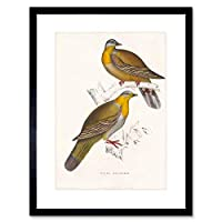 Painting Birds Himalayas Gould Yellow Foot Green Pigeon Framed Wall Art Print ペインティング鳥黄緑壁