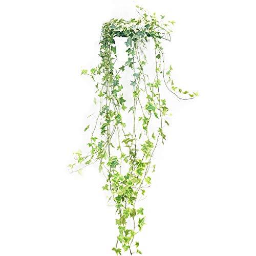 【手がかからない】育てやすい人気の観葉植物おすすめ商品10選のサムネイル画像