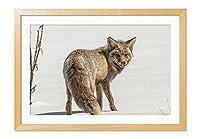 冬のフォックス 動物の写真木製額縁アートポスター(35cmx50cm 原色)