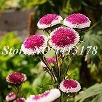 45個/バッグアスターの花屋外の花カラフルな菊の種子多年生の花ホームガーデンの種子簡単に育ちます:1