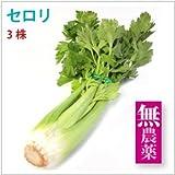 【セロリ3株】無農薬栽培セロリ!【送料無料】