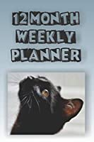 12 Month Weekly Planner: 1 Year Daily Monthly Planner, Undated Start Anytime, Black Cat Looking Up Cover