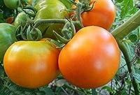トマトZolotaya Korolevaの4グラム/ 80種子