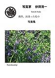 偶然、出逢った花の写真集