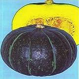 かぼちゃ 種 【 ジェジェJ 】 種子 小袋 (約16粒)