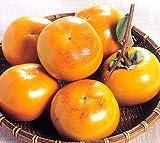 熊本県産 柿 太秋柿 たいしゅうがき 10-14玉入り