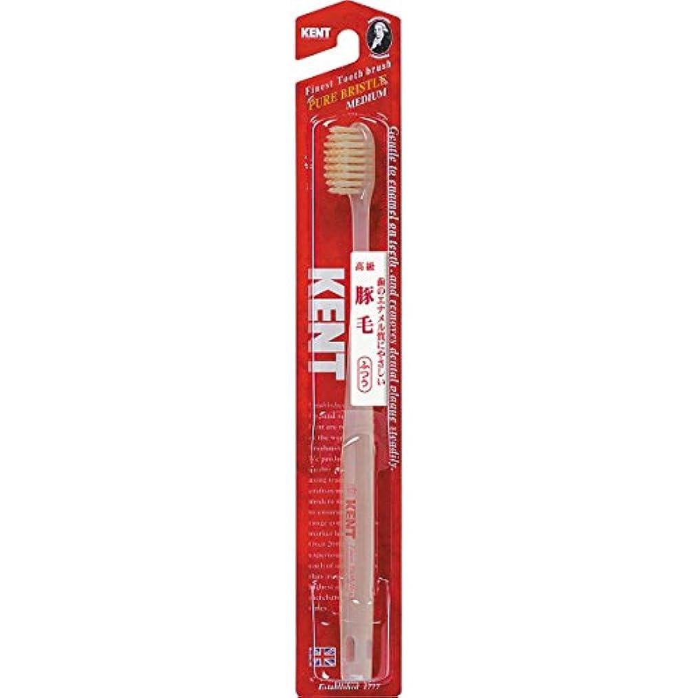 お祝いチケット受け皿KENTケント 豚毛歯ブラシ 毛の硬さ:ふつう KNT-1233 6本セット