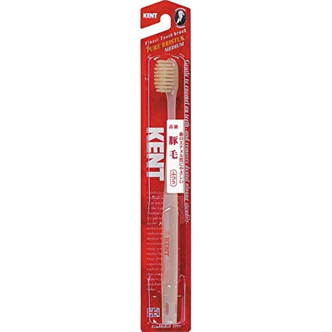 冒険容疑者プレミアKENTケント 豚毛歯ブラシ 毛の硬さ:ふつう KNT-1233 6本セット
