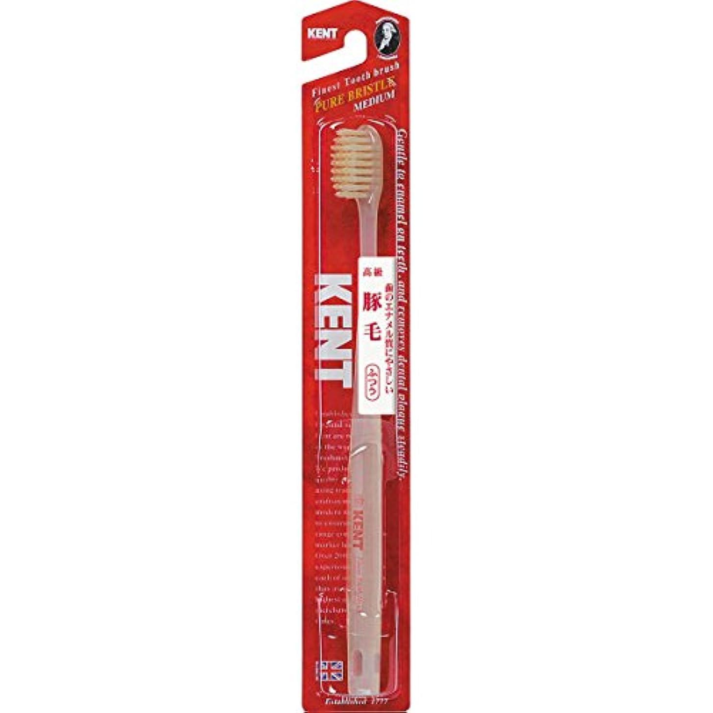 きしむ蒸気ルーキーKENTケント 豚毛歯ブラシ 毛の硬さ:ふつう KNT-1233 6本セット