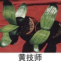 スカイブルー:Free10Pcs / Lot屋内の鉢植えの花Cliviaの種子、種子の品質カラーブルーオーキッド鉢植え植物Sementes De Plantas