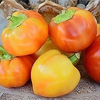 種子パッケージ:発芽SEEDSアルマパプリカペッパーConional&オーガニックのPLATFIRM-1月4日グラ種子