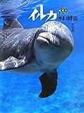 イルカ (ぼくら地球のなかまたち 1)