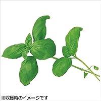 ユーイング 水耕栽培器 Green Farm グリーンファーム 水耕栽培種子 スイートバジル 5袋セット UH-HD03-5SET