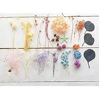 プリザーブド&ドライフラワー花材セット【ハーバリウム綺麗めカラー花材+リボン】