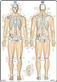 骨と関節まるわかりシート