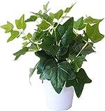MedianField 観葉植物 造花 鉢 インテリア 雑貨 人工 フェイク グリーン 緑 植物 鉢植え 葉 (アイビー)