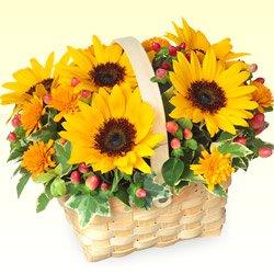 誕生日フラワーギフト 花キューピットのひまわりのウッドバスケット花 ギフト 誕生日 プレゼント