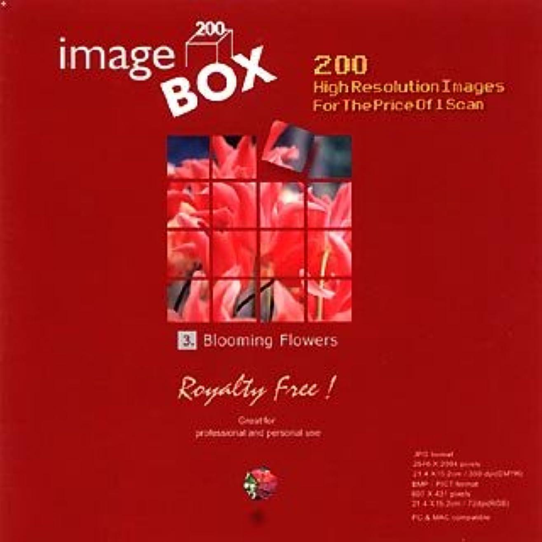 灰平和的コンテンポラリーイメージ ボックス Vol.3 花爛漫