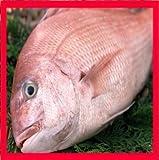 鯛 塩焼き(1.7kg) 三重県産養殖鯛【お祝い】