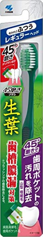 球体帳面科学者小林製薬 生葉45°磨きブラシ 歯周ポケットの汚れを除去 レギュラー ふつう